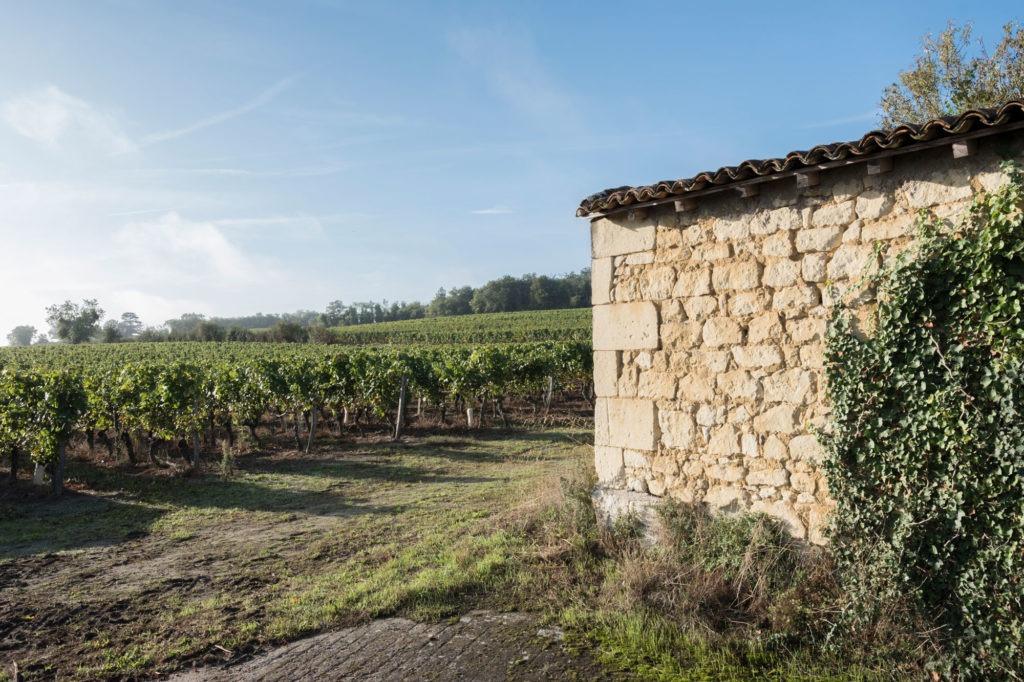 Élaboration vins Terroir Saumur
